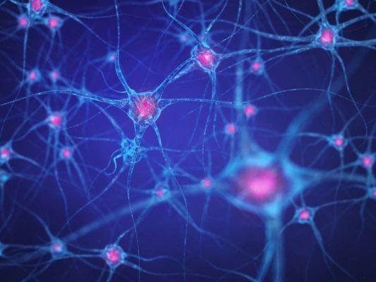 Le projet consiste à injecter des cellules souches pour former de nouveaux neurones qui vont se connecter et ramener le cerveau à la vie. © nobeastsofierce, Fotolia