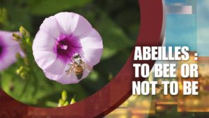 Abeilles to bee or not to be